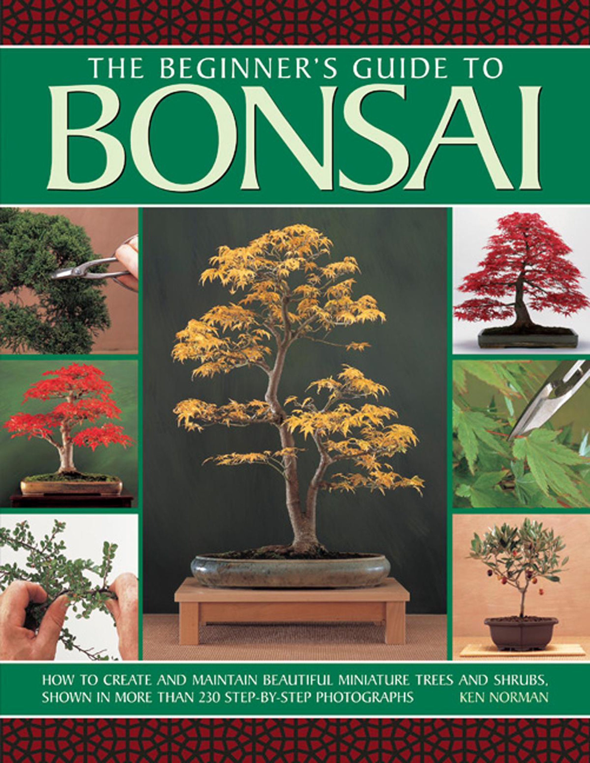 The Beginner s Guide to Bonsai How To Create And Maintain
