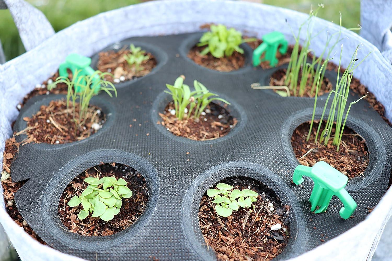 Home Garden Seeds – Seedsheet Grow Your Own Organic