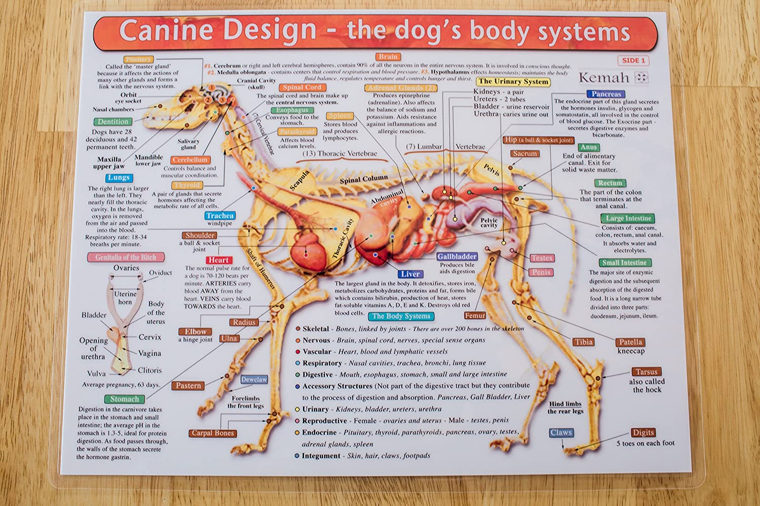 The Dog\'s Body Systems - A Double-Sided, UV Protected, Laminated Dog ...