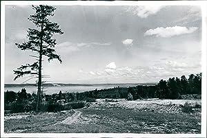 Vintage Photos 1978 State Park Commission Dash Point Acres Dion Beauty Landscape 7X9