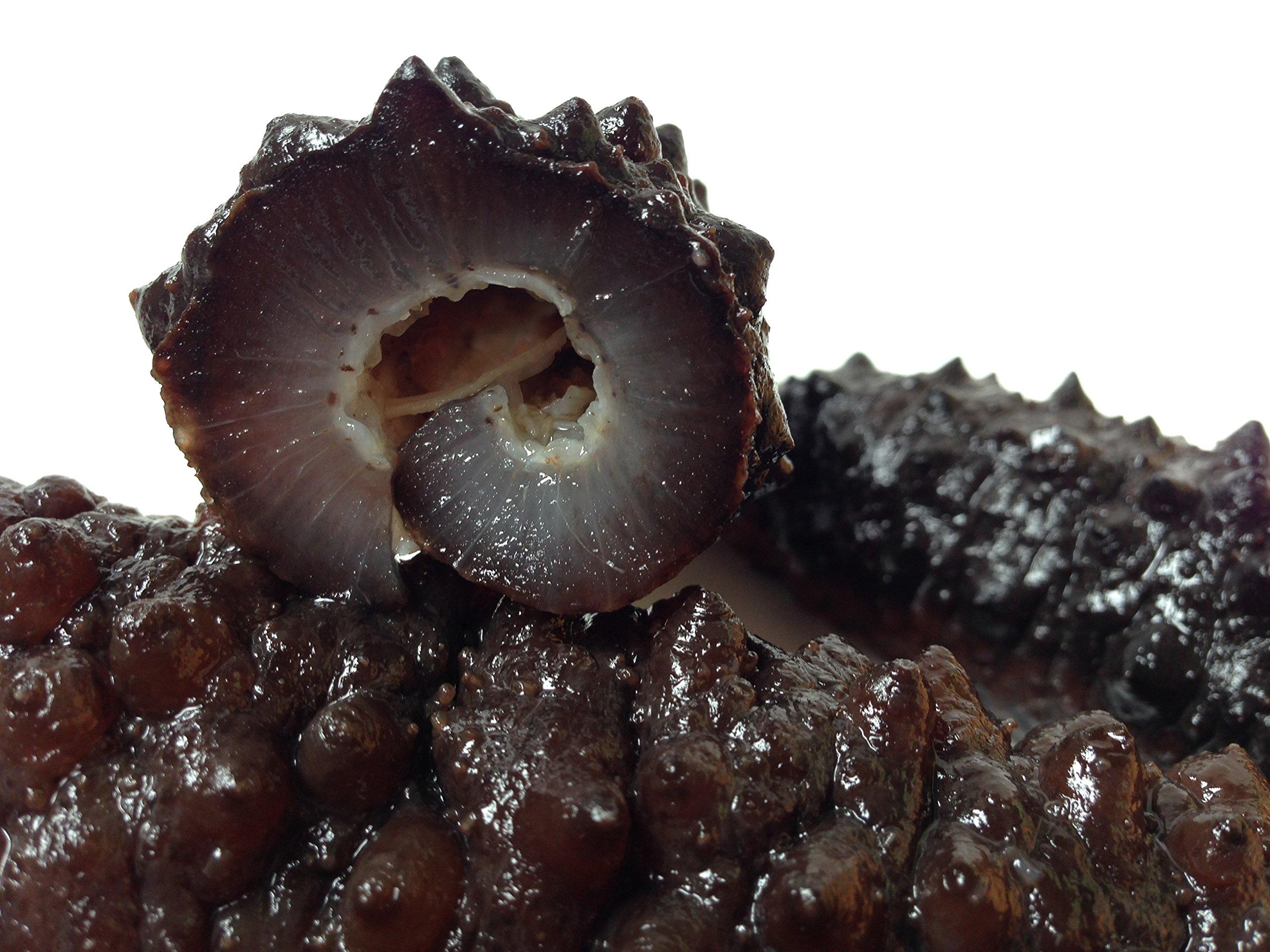 海参天下 Wild Black pin Atlantic Dried Sea cucumber 8oz pack (60-90pcs #5)大西洋岩刺参 8oz(60-90头,5号) by Sea Cucumber Inc (Image #2)