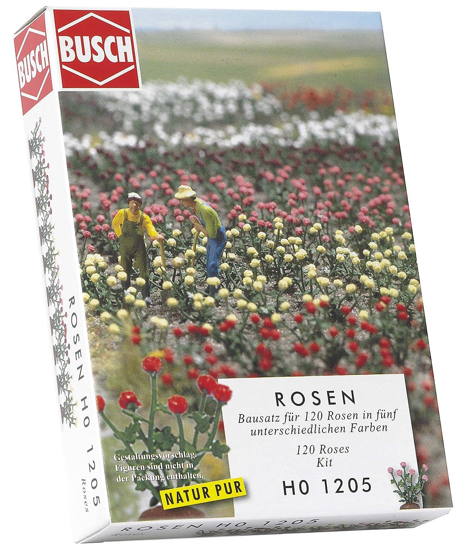 Rosen Busch 1205