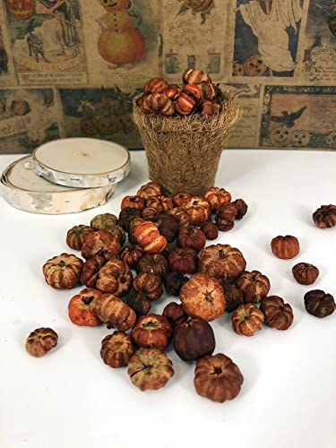 Amazon Five Full Cups Rusty Orange Pumpkin Putka Pods Mini