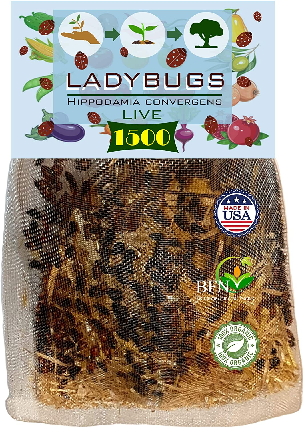 Clark&Co Organic 1500 Live Ladybugs - Good Bugs for Garden - Hippodamia Convergens Beetles - Guaranteed Live Delivery!