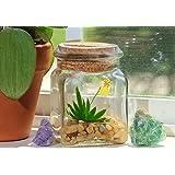 "BLOOMIFY Miniature Miniature Orchid Terrarium - Zero Care - 4"" Tall Jar - Psygmorchis pusilla plant"