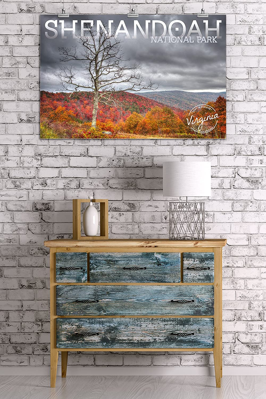 Fall Colors and Tree 84828 Virginia 24x36 SIGNED Print Master Art Print - Wall Decor Poster Shenandoah National Park