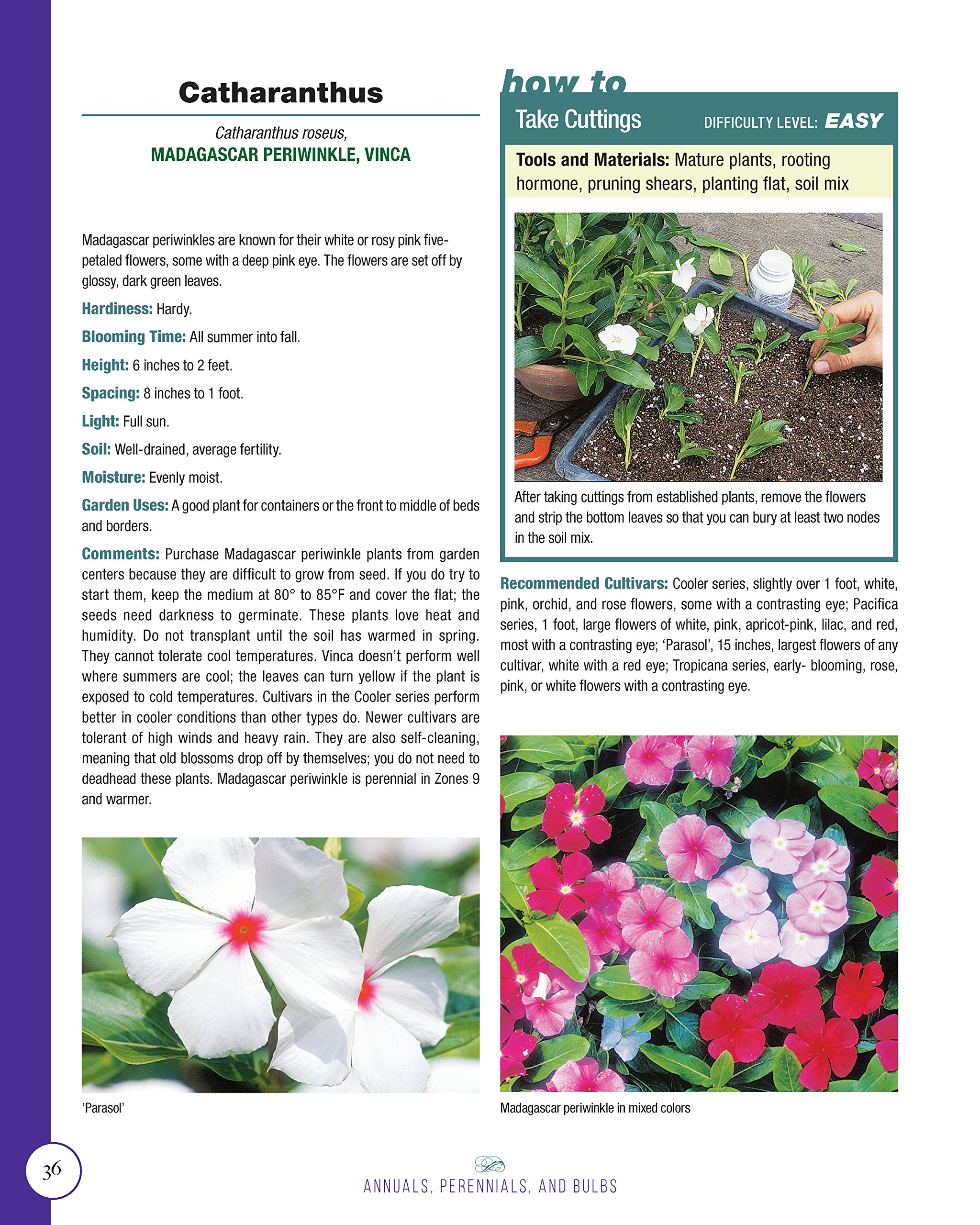 Annuals Perennials And Bulbs 377 Flower Varieties For A Vibrant