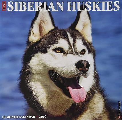 Just Siberian Huskies 2019 Wall Calendar Dog Breed Calendar