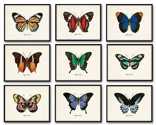 Papillon Butterfly Print Set No.12 Set of 9 Vintage Butterfly Prints Home Decor Wall Art