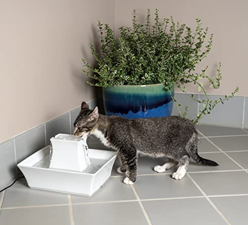 type-of-cat-water-fountain