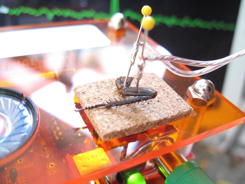 amazon com backyard brains spikerbox neuroscience in a box toys