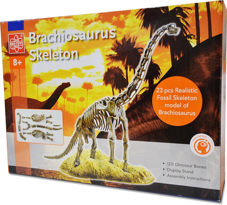 Elenco Edu Toys Brachiosaurus Skeleton Model Kit Snap Circuits Jr Select By Electronics Inc On Barstons Childs Games