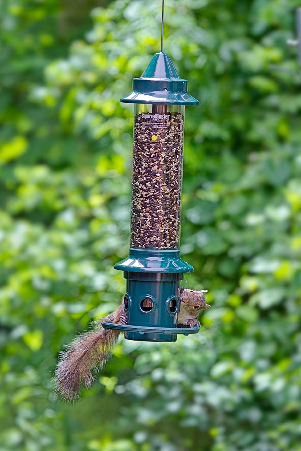 adding how fountain your bath a proof squirrel bird feeder yard to