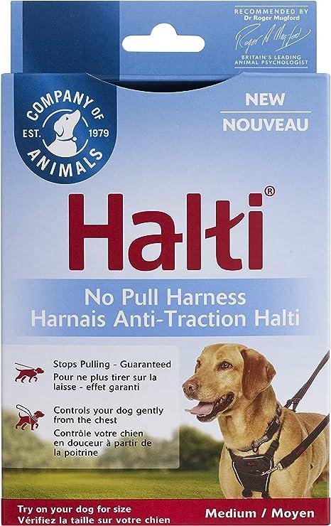 Halti H: Amazon.es: Productos para mascotas