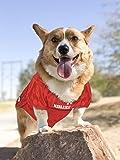 NCAA NEBRASKA HUSKERS DOG Jersey, Large