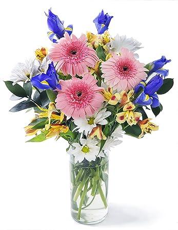 Happy Birthday Wishes Bouquet 10 Yellow Alstroemeria 3 Pink Gerbera Daisies 5 Blue