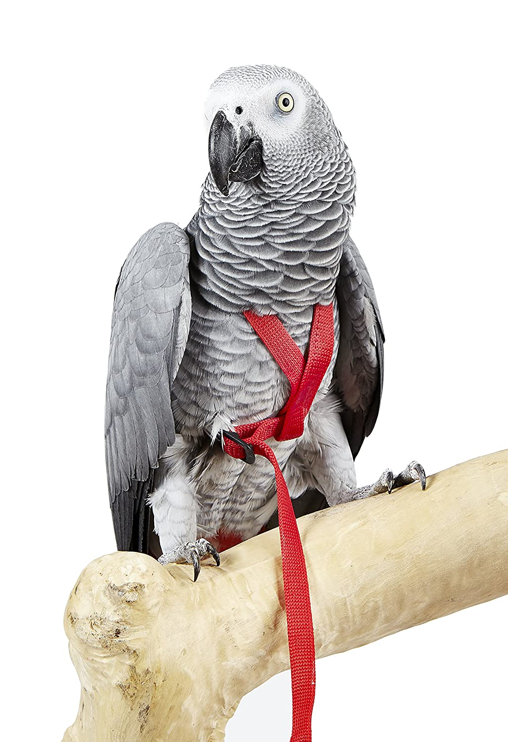 HappyBird | Fluggeschirr Adventure Bird Harness X-SMALL Wagner' s