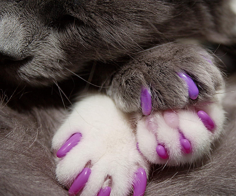 Cómo usar las fundas de uñas para gatos