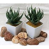 Sukkulenten Agave Grünpflanze Kunstpflanze H: 16,5 cm - 2 Stück