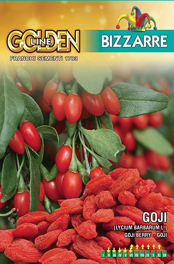 Franchi Seeds Of Italy Goji Berries Seeds For Planting Amazon Co