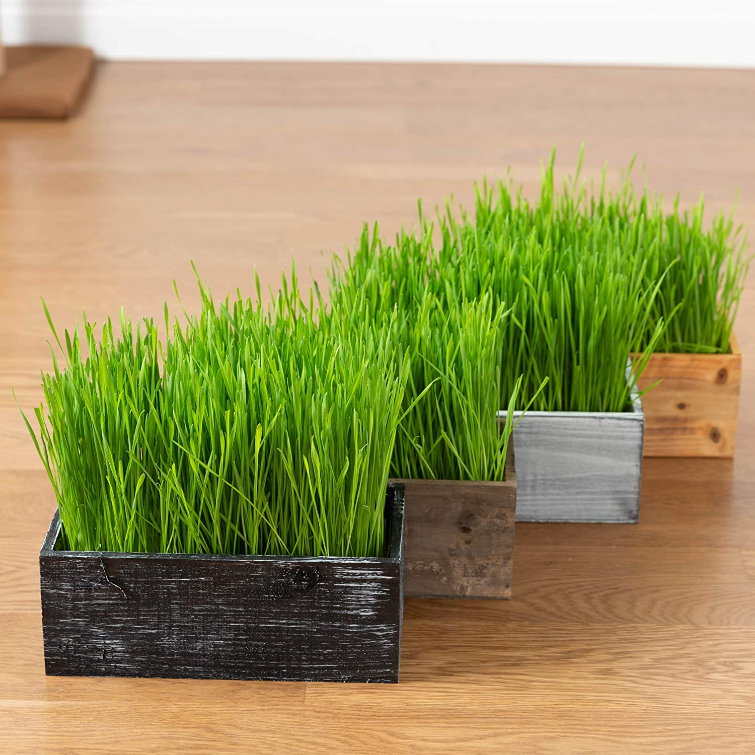 Best grass seed reviews consumer reports