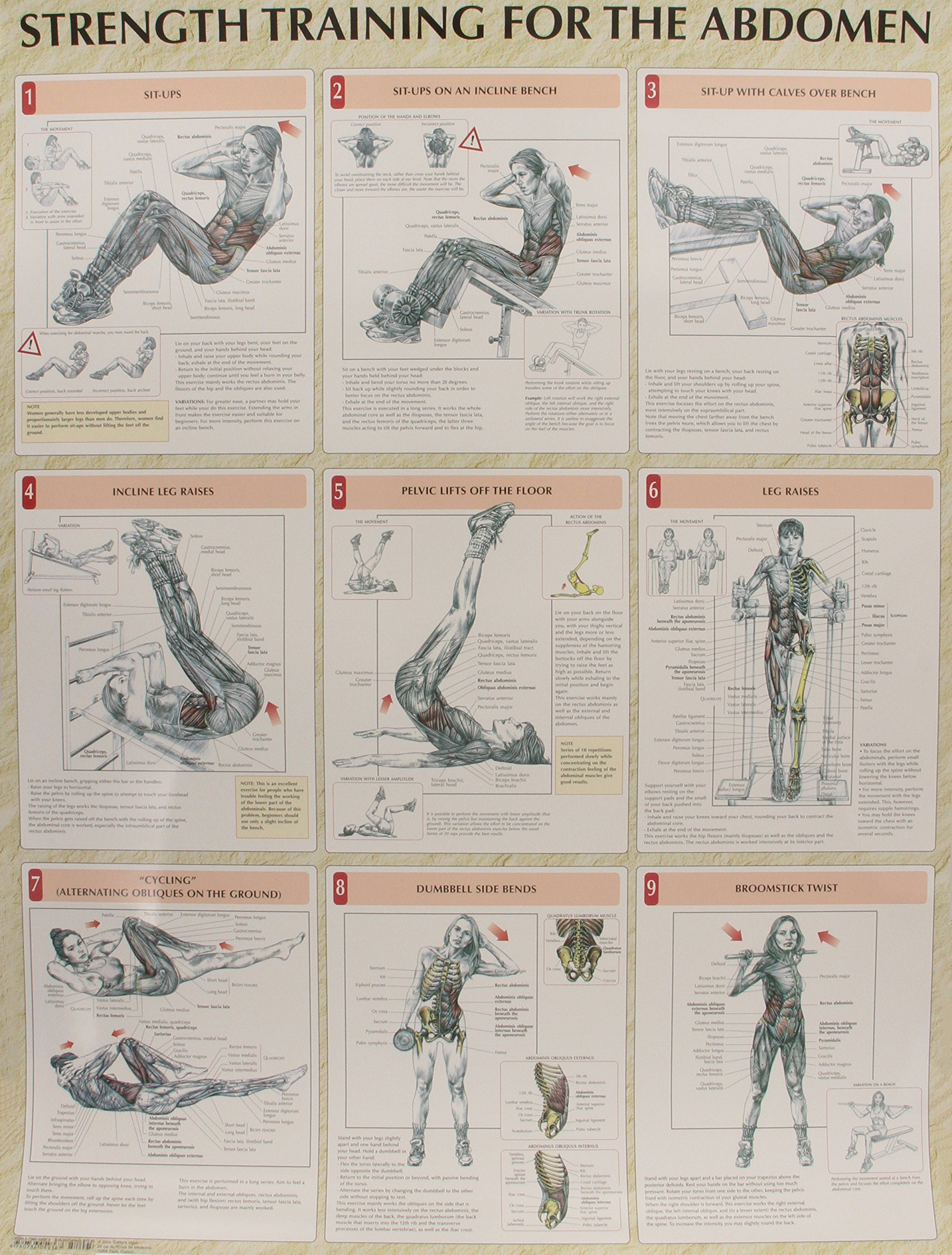 Strength Training Anatomy Poster Series: Amazon.co.uk: Frederic ...
