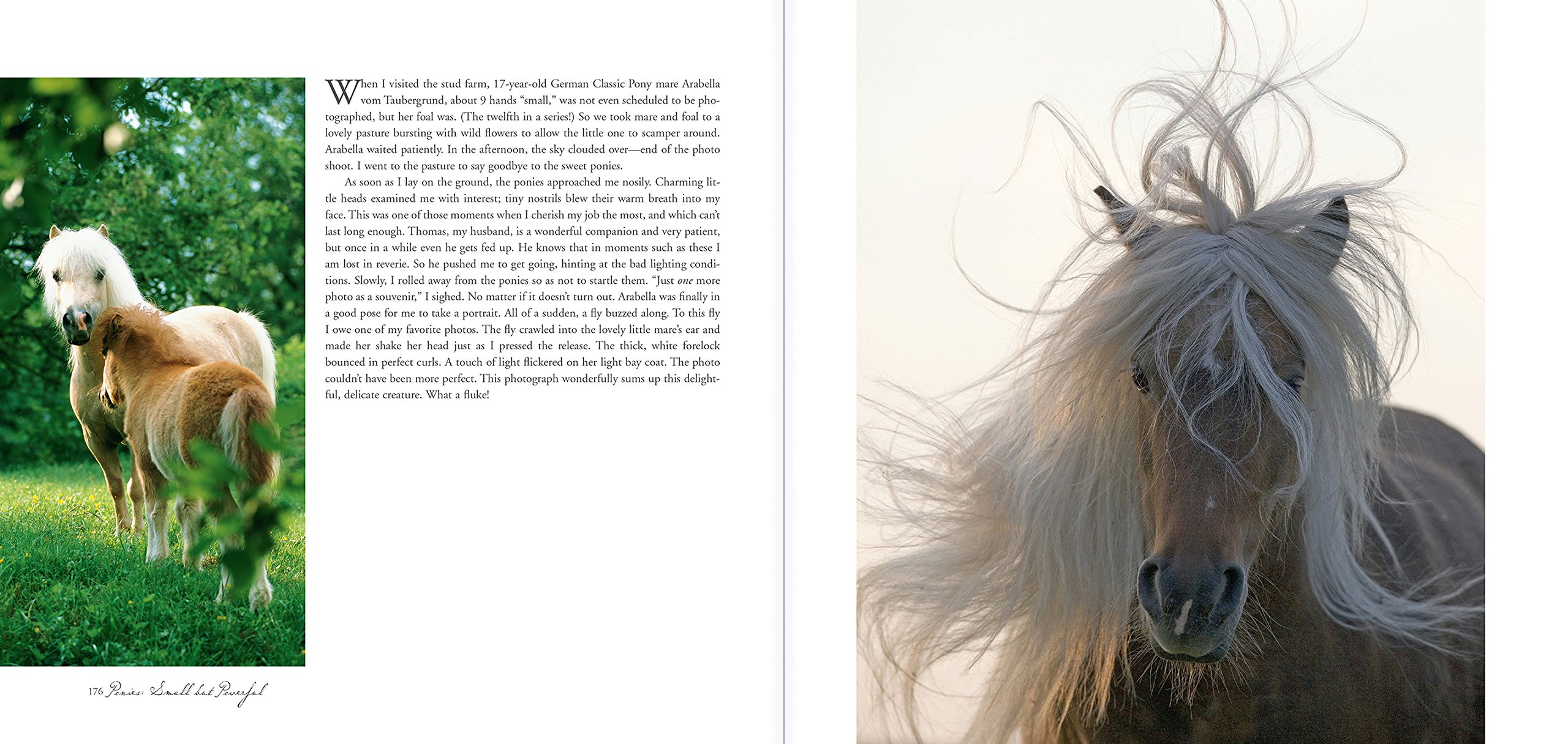 Horse a Portrait A grapher s Life With Horses Christiane