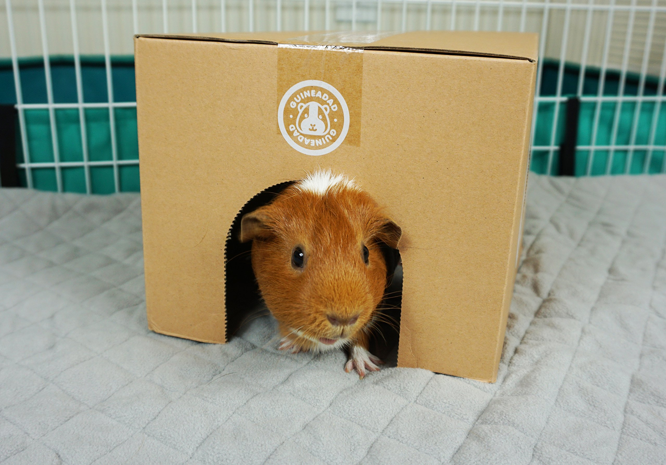 GuineaDad Fleece Liner 2.0 | Guinea Pig Fleece Cage Liners Bedding | Burrowing Pocket Sleeve | Extra Absorbent Antibacterial Bamboo | Waterproof | Available Various Cage Sizes by GuineaDad (Image #3)