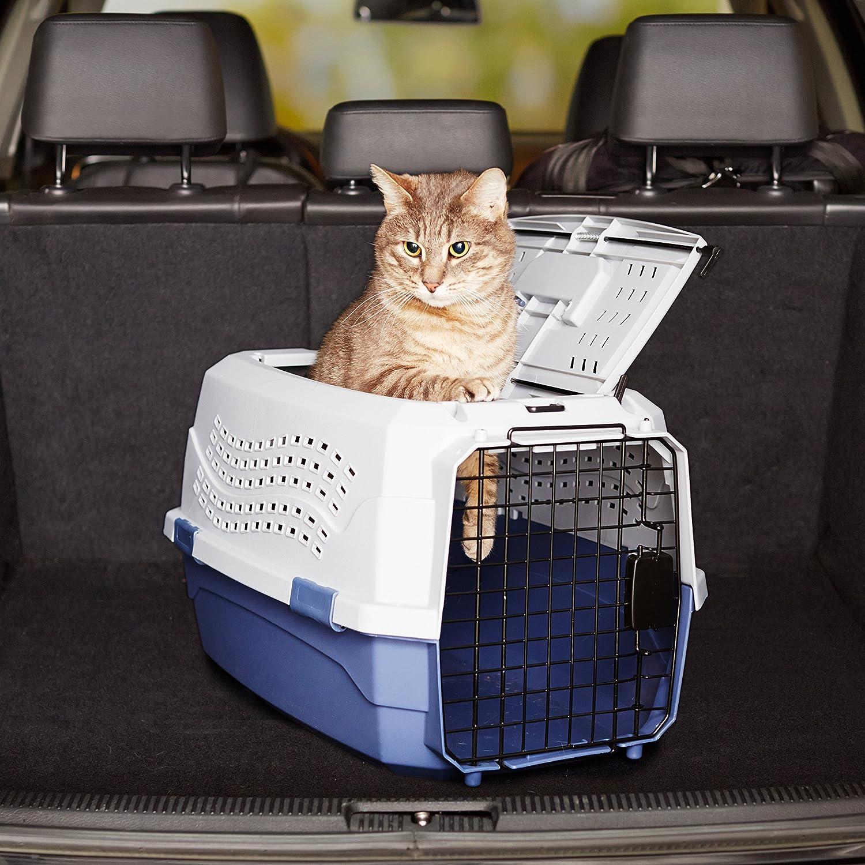 Das Bild zeigt eine Katze, die bei einer von vorne und von oben zu öffnenden Katzenbox herausschaut.