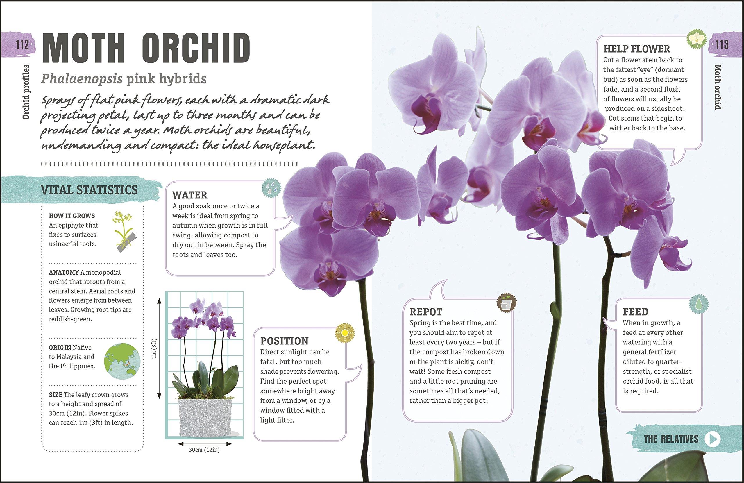 Happy Orchid: Help it Flower, Watch it Flourish: Amazon.co.uk: Sara ...
