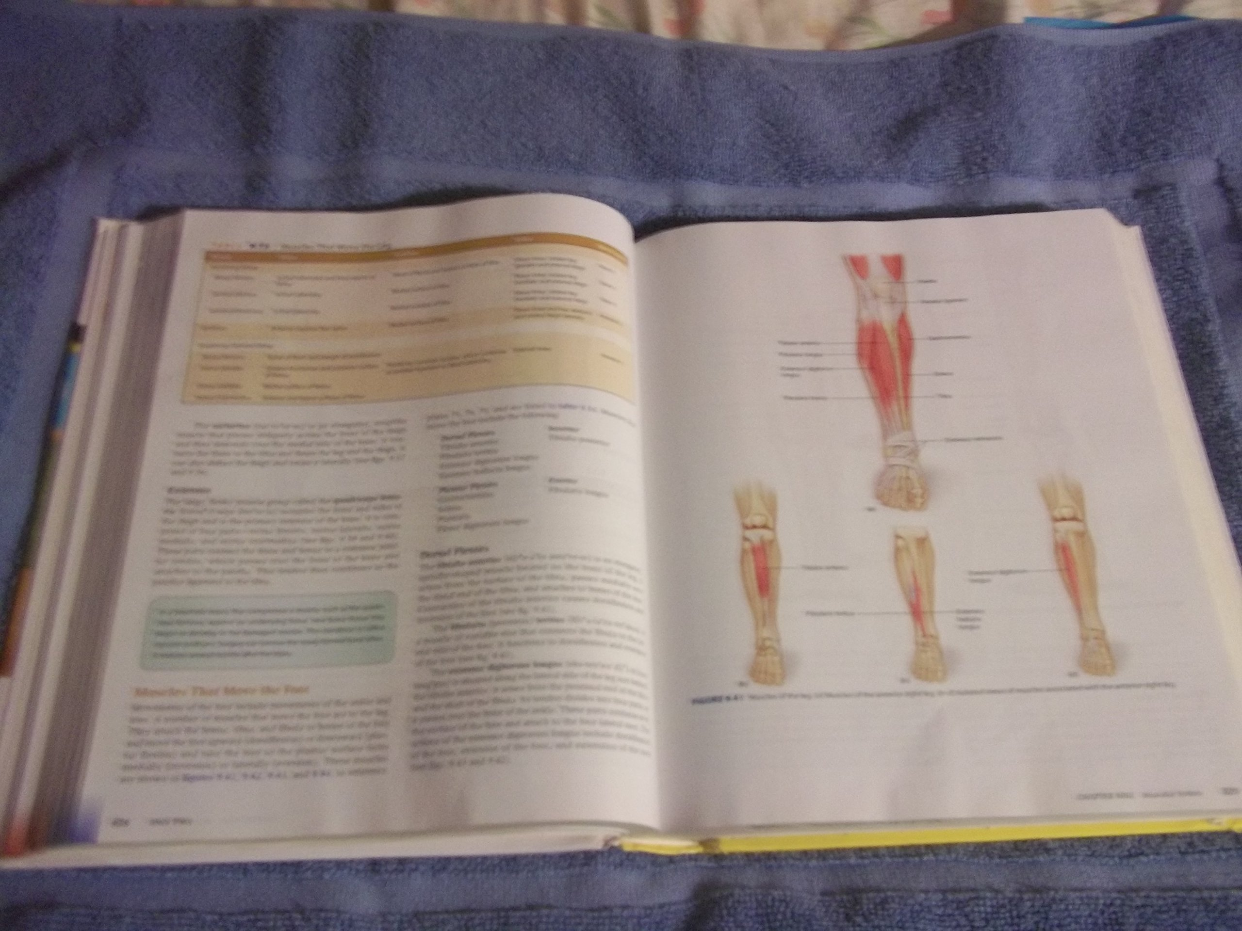 Hole\'s Human Anatomy & Physiology 12th edition by Shier, David ...