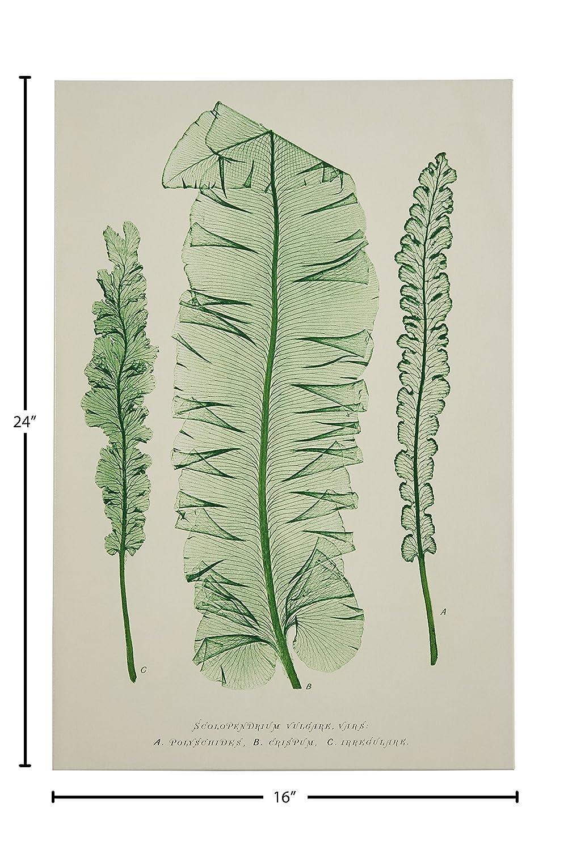 Amazon.com: Moderno Blanco y Verde Botanical Canvas Print ...