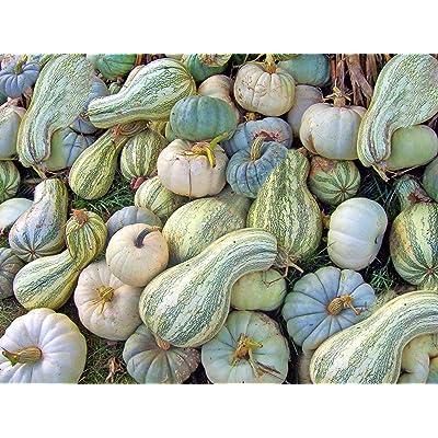 Handmade Cushaw Squash - Striped Pumpkin 25 Vegetable Seed -Non GMO - Native American Heirloom- Seed Sale Overstock Sale Price : Garden & Outdoor