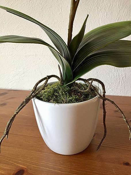 Flores artificiales, vino o burdeos orquídea Phalaenopsis incluidos blanco Jarrón de cerámica, 22
