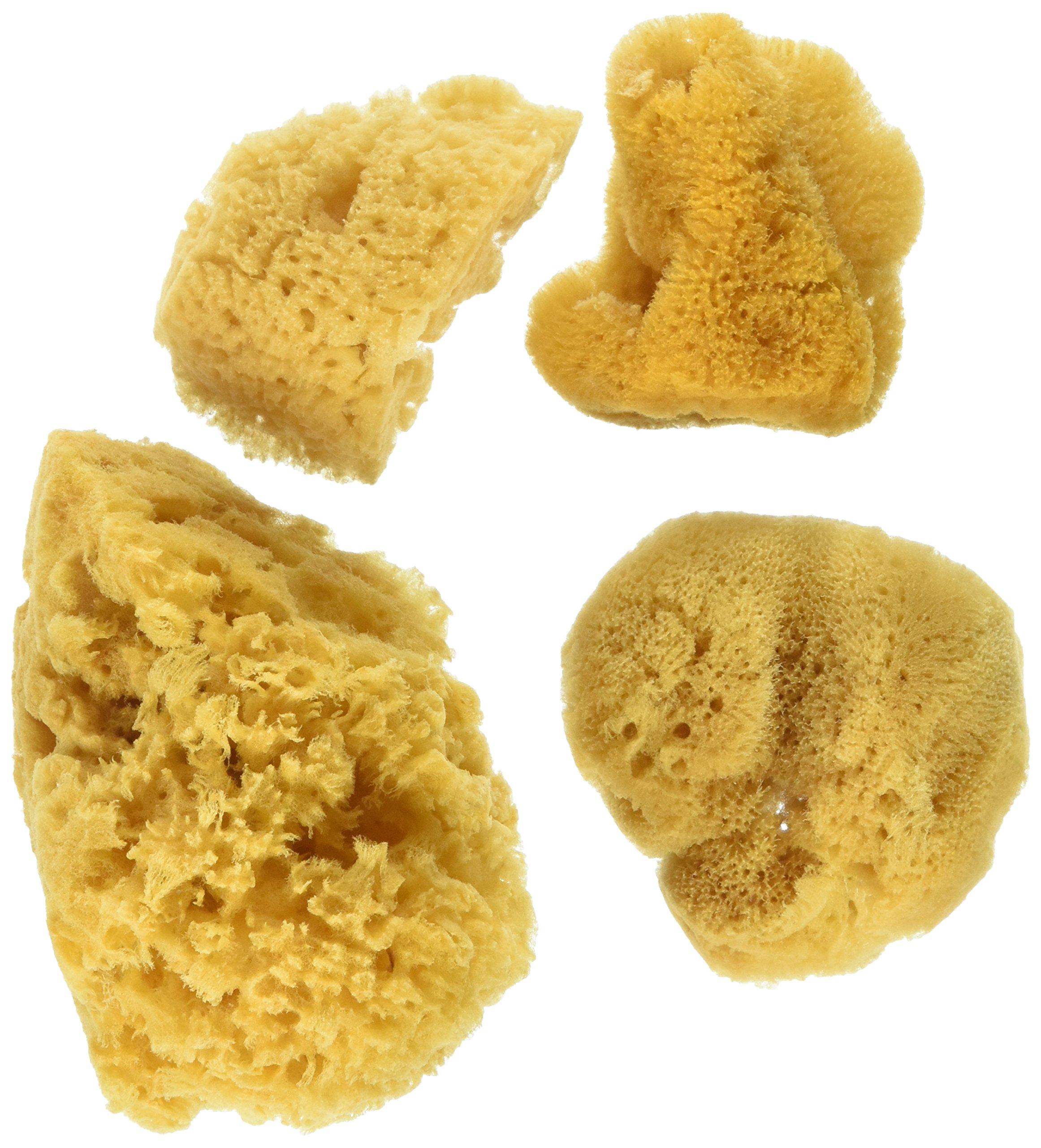 Natural Ocean Artist Sponges, 3 Silk/1 Jumbo, 4/pkg