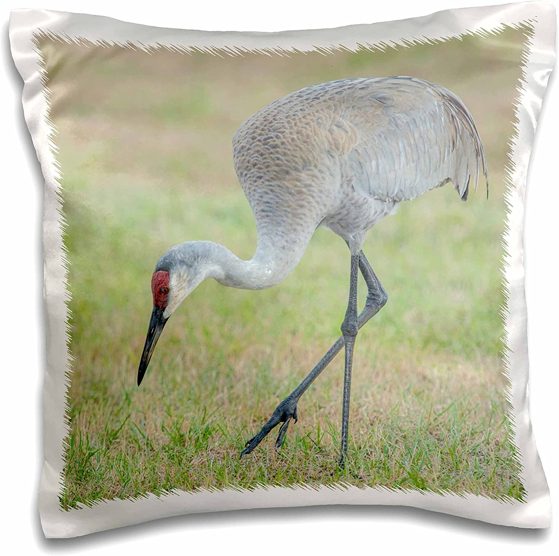 3dRose USA, Florida, Eustis. Sandhill Crane, Grus Canadensis, Adult Feeding.-Pillow Case, 16 by 16