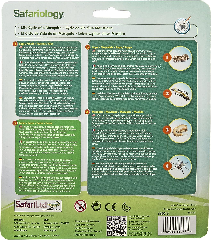 Safari 662616 - Ciclo de Vida de un Mosquito: Amazon.es: Juguetes y juegos
