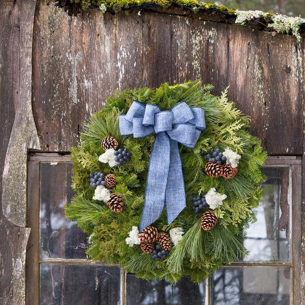 Blue Bow, Fabric Makes a Great Gift HARBOR FARM EST.1986 Fresh Real Blueberry Christmas Wreath for Front Door Lasts Through The Holiday Season Arrives in Red Gift Box