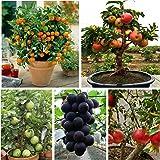 Green Gardens Dwarf Fruit Seeds Combo Orange,Apple, Grape, Pomegranate, Guava 5 seeds Each