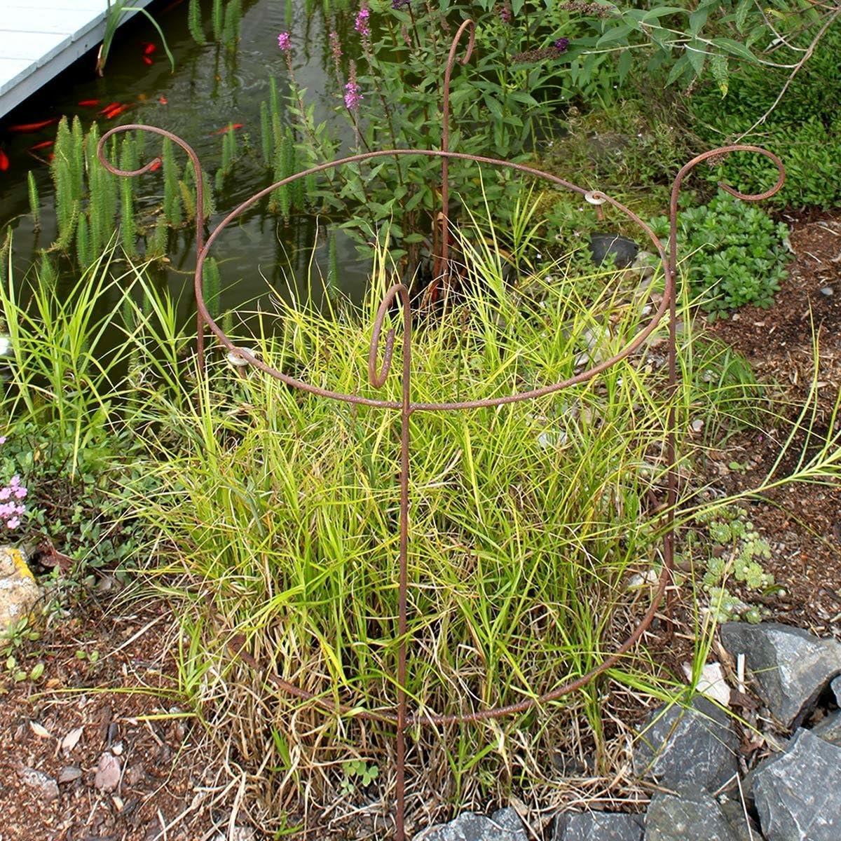 tomgarten Staudenhalter Rondo Stabiler Metall Staudenhalter mit Naturrost Patina Idealer Blumenhalter 78 x 43 cm groß