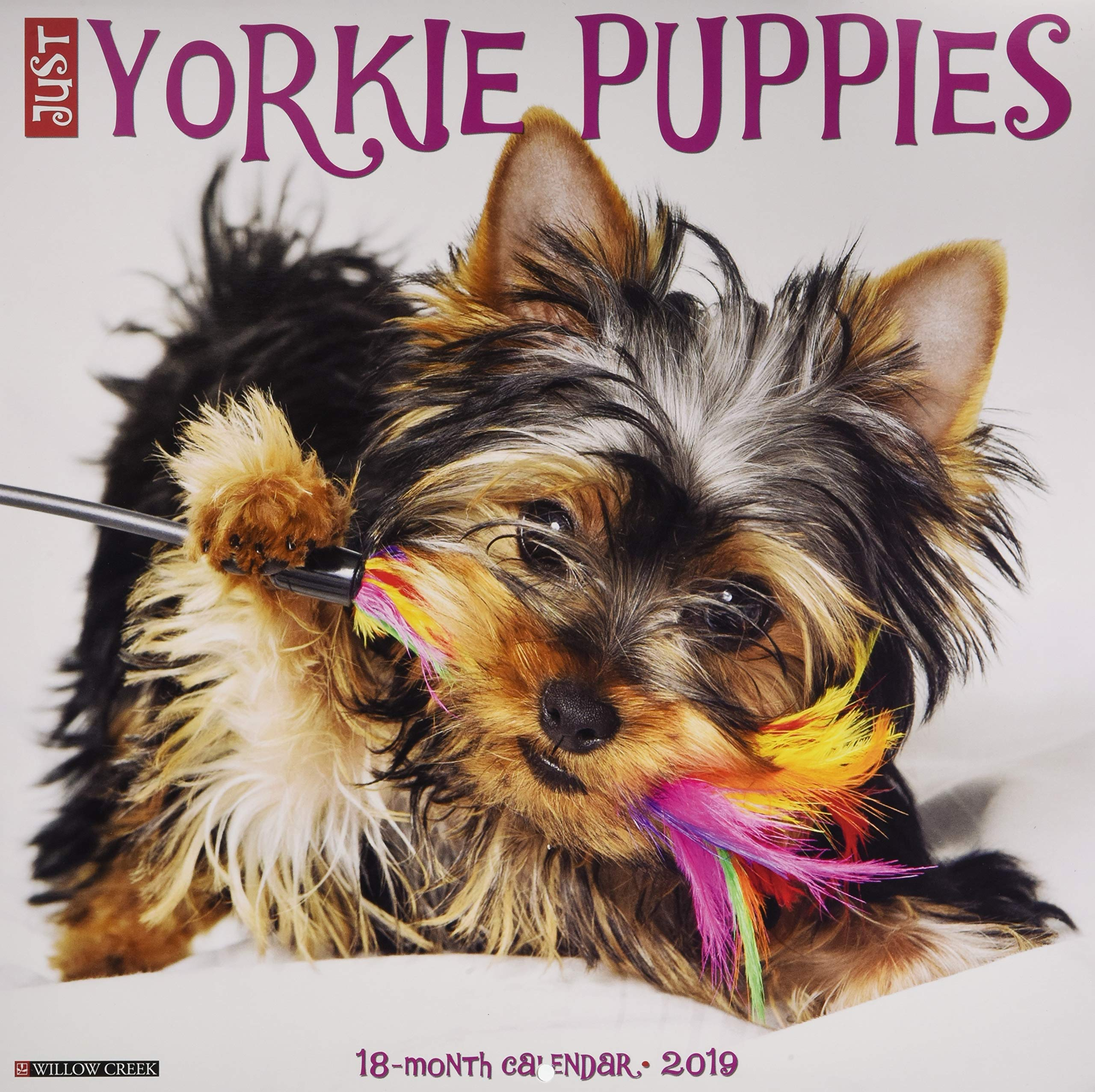 Just Yorkie Puppies 2019 Wall Calendar Dog Breed Calendar Willow