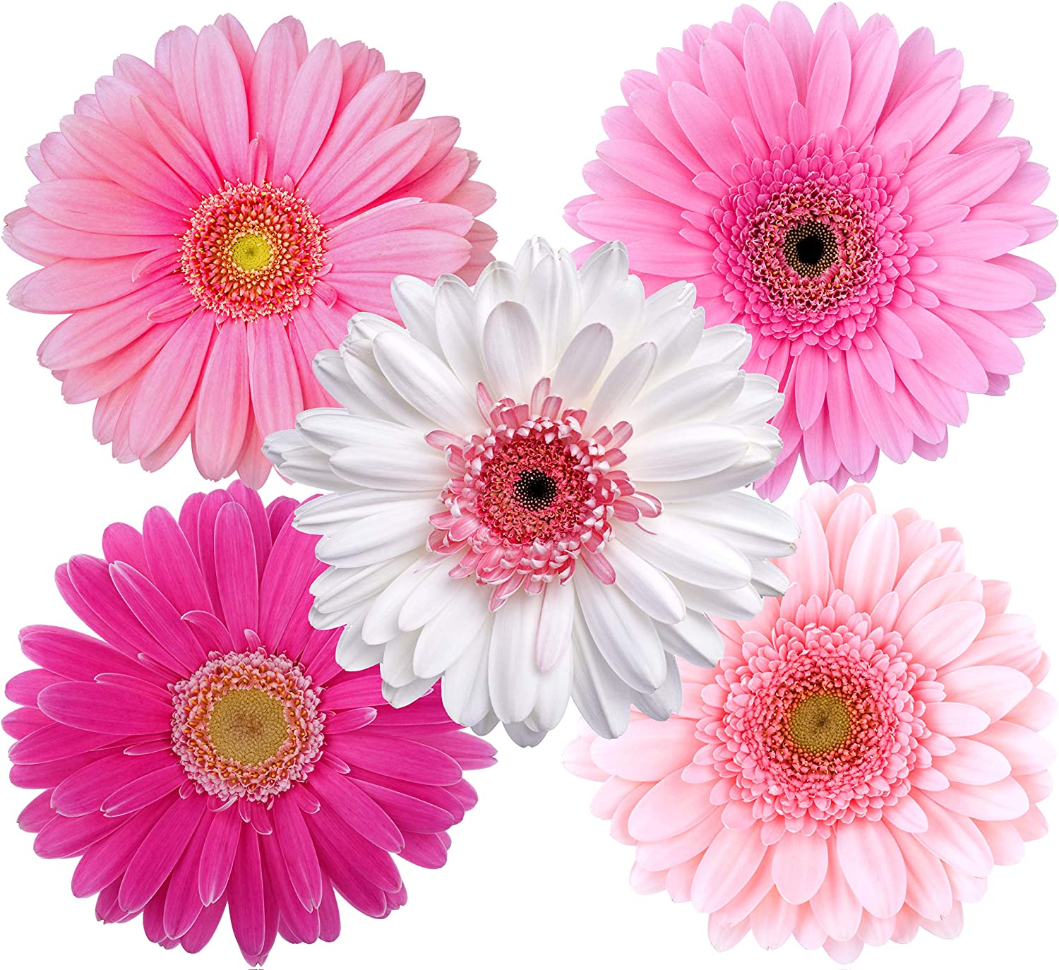 Amazon.com: StikArt Pink Gerber Daisies and White Gerber Daisies Flower  Wall Decals: Home & Kitchen