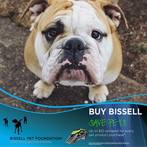 Bissell pet stain eraser review: an ideal tool for small messes