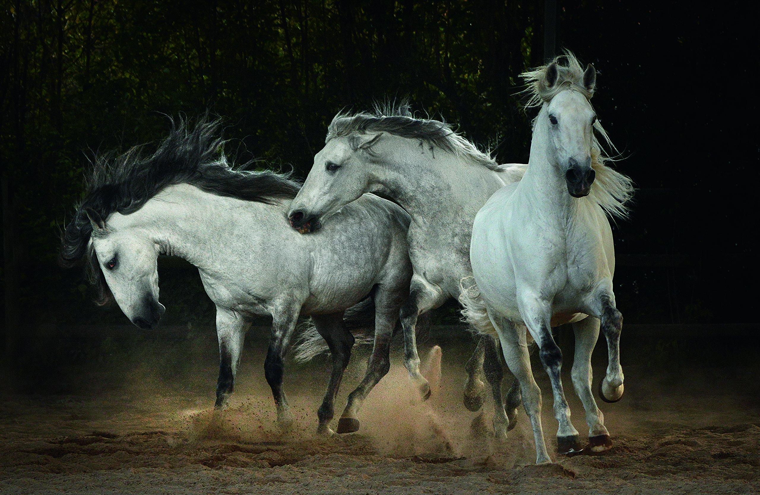 Amazon Horses Tony Stromberg Books