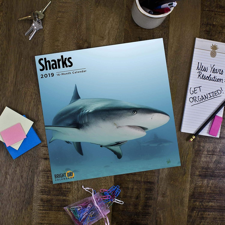 Sharks 2019 Wall Calendars 12x12 Inches