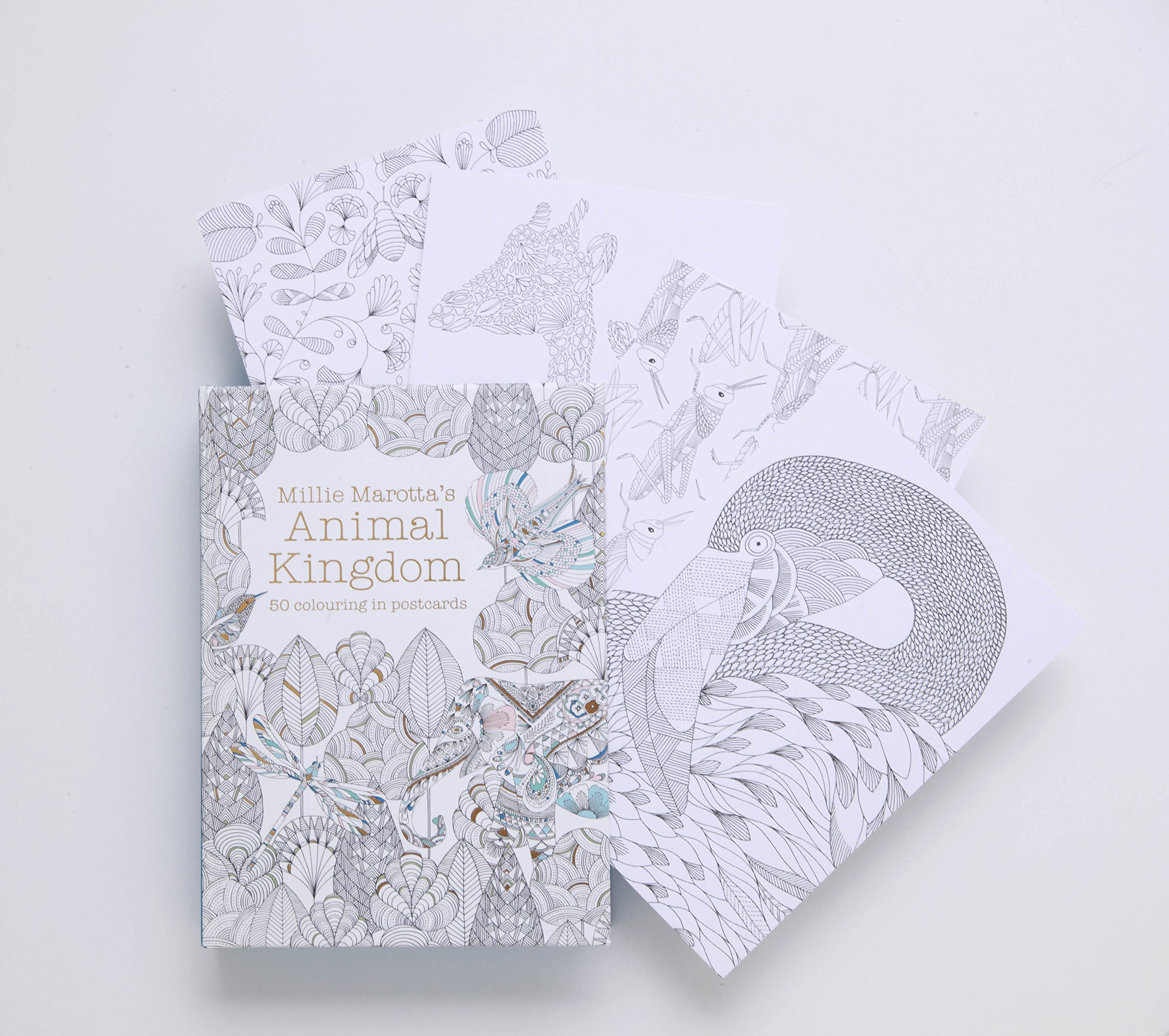 Millie Marottas Animal Kingdom Postcard Box Colouring Books Amazoncouk Marotta 9781849942904