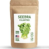 Seedra Cilantro Seeds for Planting Indoor and Outdoor - Non-GMO Heirloom 300 Seeds/2,6 g with Instructions - 1 Pack