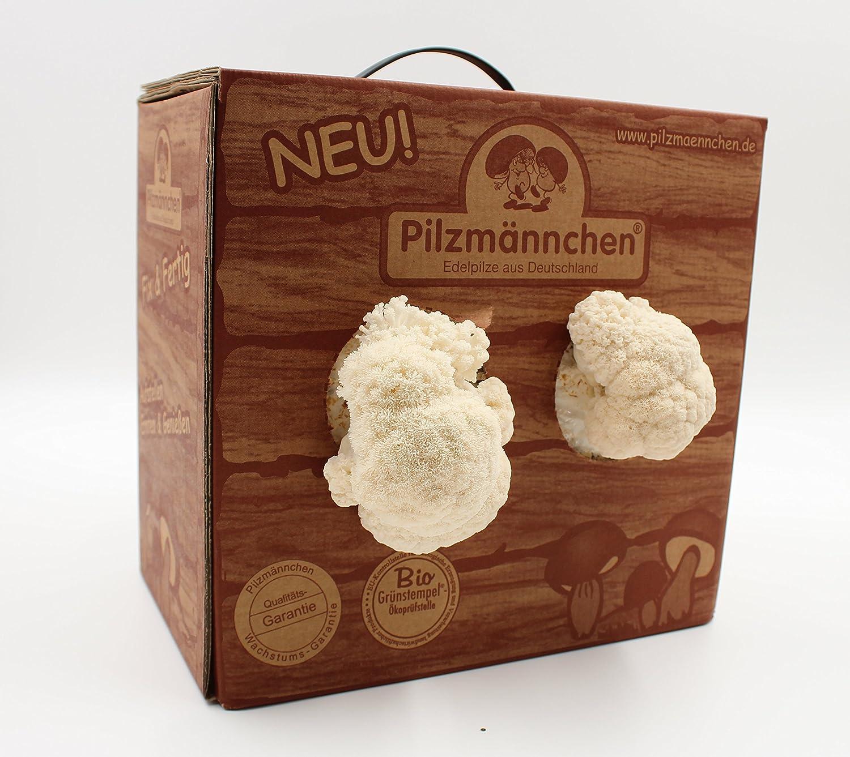 Pom Pom Pilzzuchtbox Bio