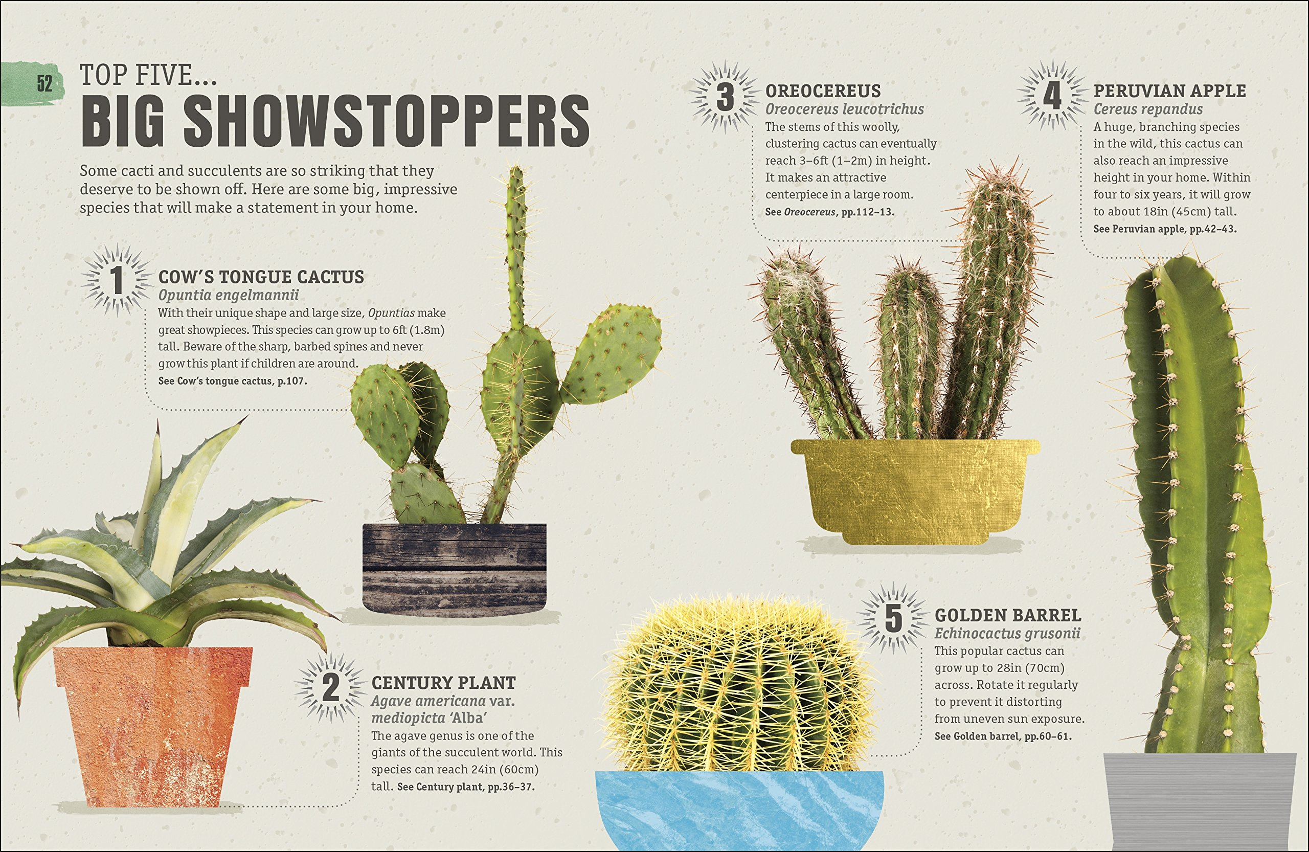 Cacti: species, home care, breeding, advice and disease 43