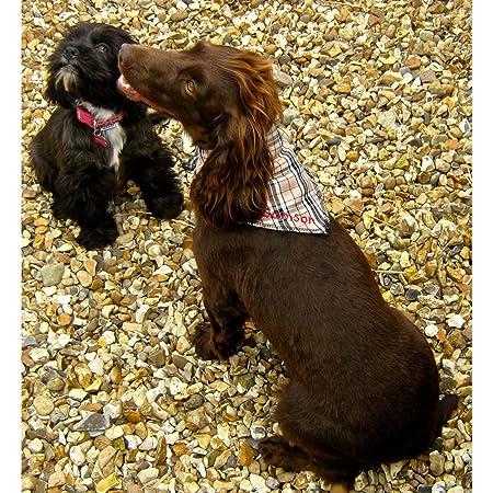 Size 3 Personalised Grrrrberry Beige Tartan Dog Bandana Spoilt Rotten Pets Fits Size 17 to 22 Neck Medium//Large Quality Designer Dog Bandana S3